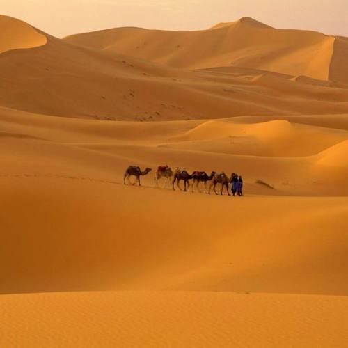Camels in Desert christian wallpaper free download. Use on PC, Mac, Android, iPhone or any device you like.