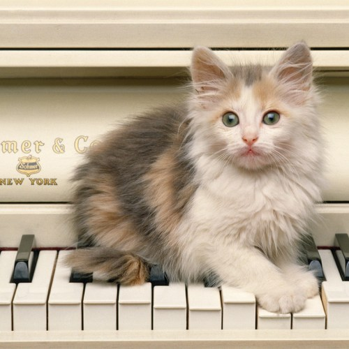 Cat on piano christian wallpaper free download. Use on PC, Mac, Android, iPhone or any device you like.