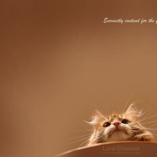 Cat christian wallpaper free download. Use on PC, Mac, Android, iPhone or any device you like.
