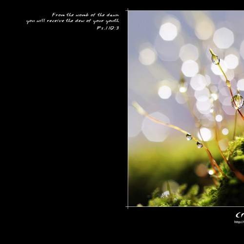 Dew of your Youth christian wallpaper free download. Use on PC, Mac, Android, iPhone or any device you like.