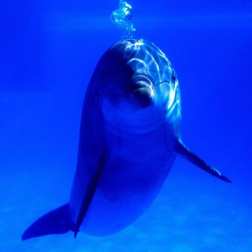 Dolphin christian wallpaper free download. Use on PC, Mac, Android, iPhone or any device you like.
