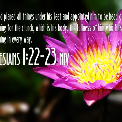 Ephesians 1:22-23 christian wallpaper free download. Use on PC, Mac, Android, iPhone or any device you like.