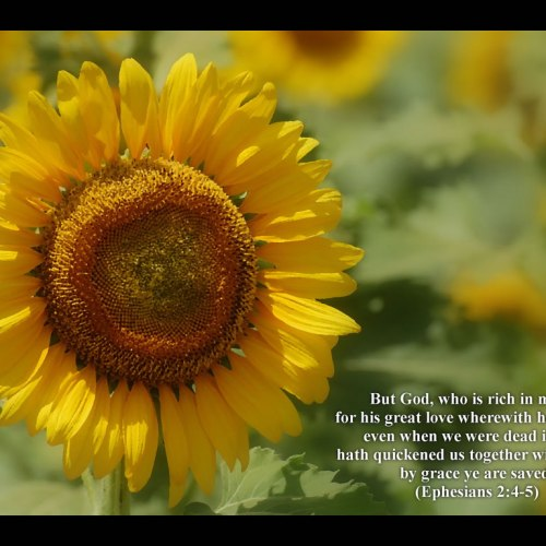 Ephesians 2:4-5 christian wallpaper free download. Use on PC, Mac, Android, iPhone or any device you like.