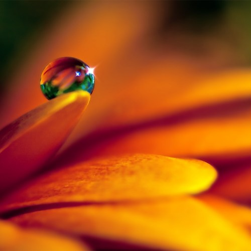 Flower and drop christian wallpaper free download. Use on PC, Mac, Android, iPhone or any device you like.