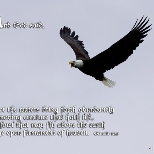 Genesis 1:20 christian wallpaper free download. Use on PC, Mac, Android, iPhone or any device you like.