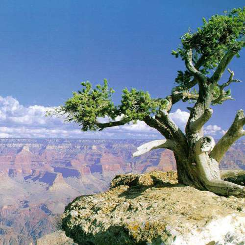 Grand Canyon Tree christian wallpaper free download. Use on PC, Mac, Android, iPhone or any device you like.