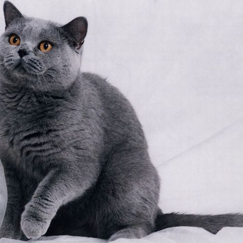 Gray Kitty christian wallpaper free download. Use on PC, Mac, Android, iPhone or any device you like.