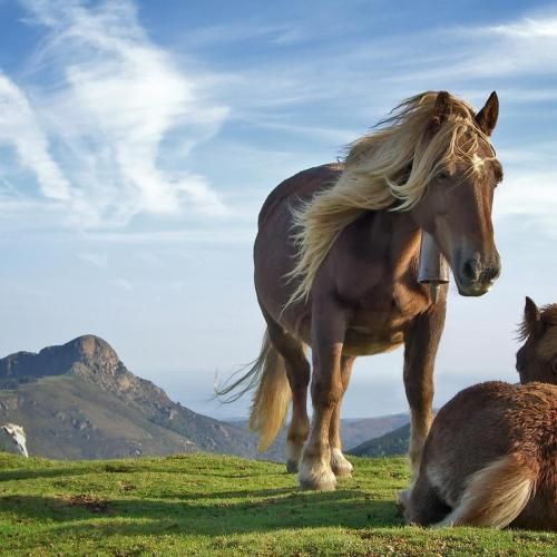 Horses christian wallpaper free download. Use on PC, Mac, Android, iPhone or any device you like.