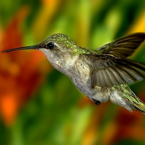 Hummingbird christian wallpaper free download. Use on PC, Mac, Android, iPhone or any device you like.