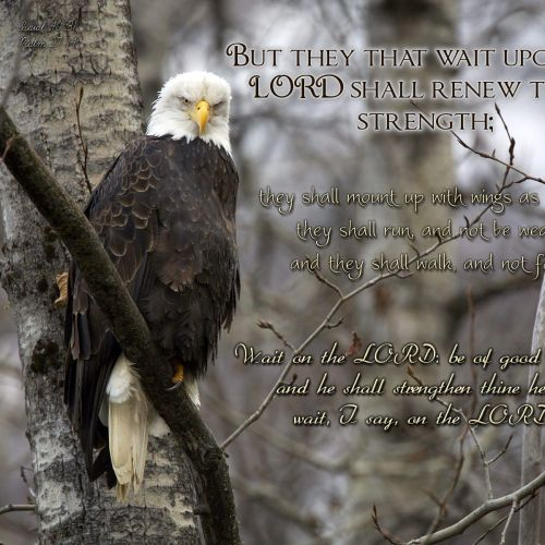 Isaiah 40:31 and Psalm 27:14 christian wallpaper free download. Use on PC, Mac, Android, iPhone or any device you like.