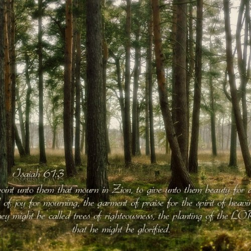 Isaiah 61:3 christian wallpaper free download. Use on PC, Mac, Android, iPhone or any device you like.