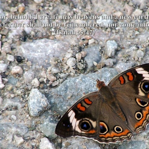 Isaiah 65:17 christian wallpaper free download. Use on PC, Mac, Android, iPhone or any device you like.