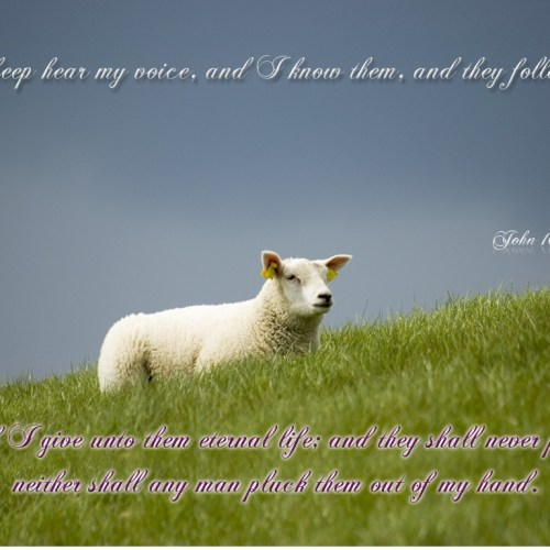 John 10:27-28 christian wallpaper free download. Use on PC, Mac, Android, iPhone or any device you like.