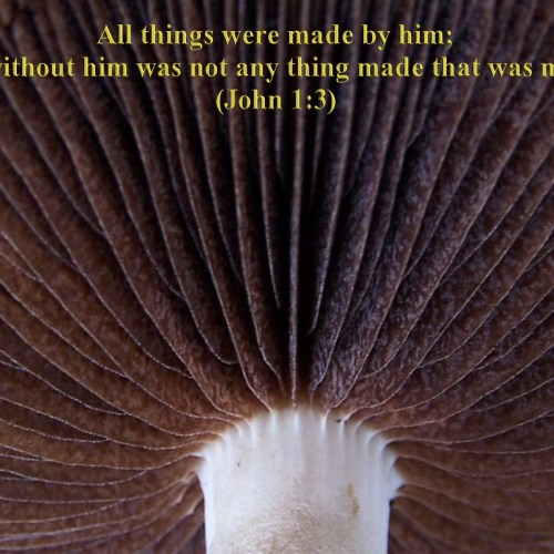 John 1:3 christian wallpaper free download. Use on PC, Mac, Android, iPhone or any device you like.