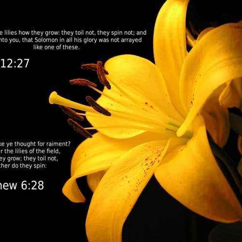 Matthew 6:28 & Luke 12:27 christian wallpaper free download. Use on PC, Mac, Android, iPhone or any device you like.
