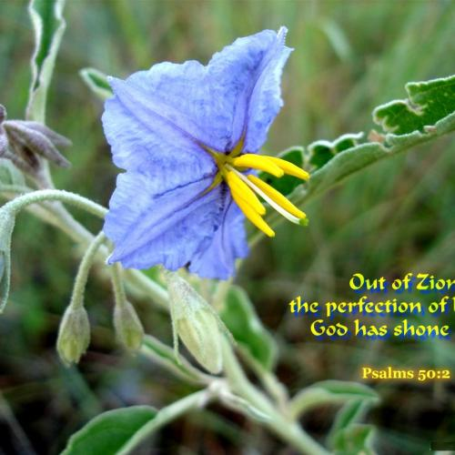 Out of Zion christian wallpaper free download. Use on PC, Mac, Android, iPhone or any device you like.