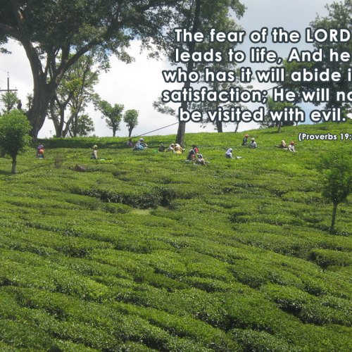 Proverbs 19:23 christian wallpaper free download. Use on PC, Mac, Android, iPhone or any device you like.
