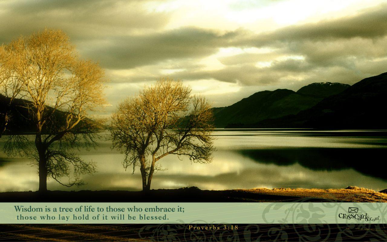 proverbs-318_3911_1280x800