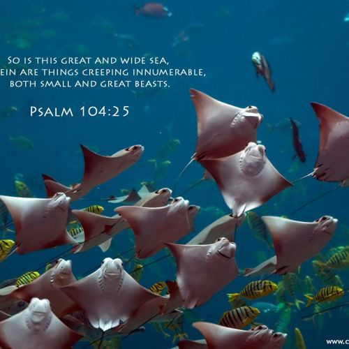 Psalm 104:25 christian wallpaper free download. Use on PC, Mac, Android, iPhone or any device you like.