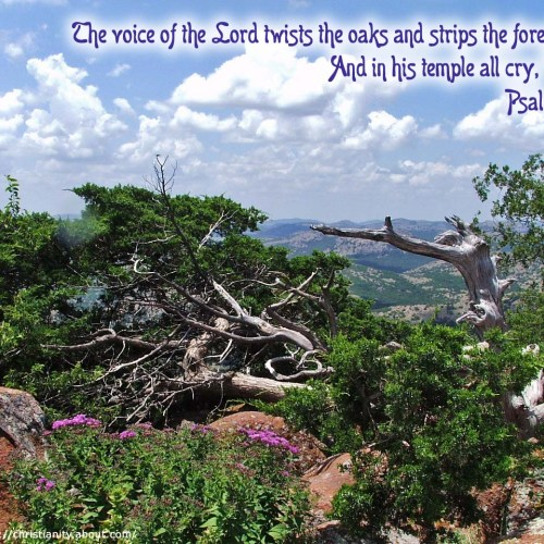 Psalm 29:9 christian wallpaper free download. Use on PC, Mac, Android, iPhone or any device you like.