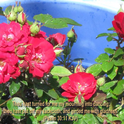 Psalm 30:11 and Flowers christian wallpaper free download. Use on PC, Mac, Android, iPhone or any device you like.