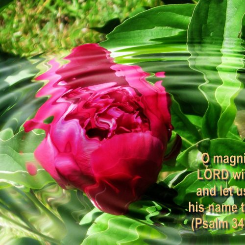Psalm 34:3 and Fllowers christian wallpaper free download. Use on PC, Mac, Android, iPhone or any device you like.