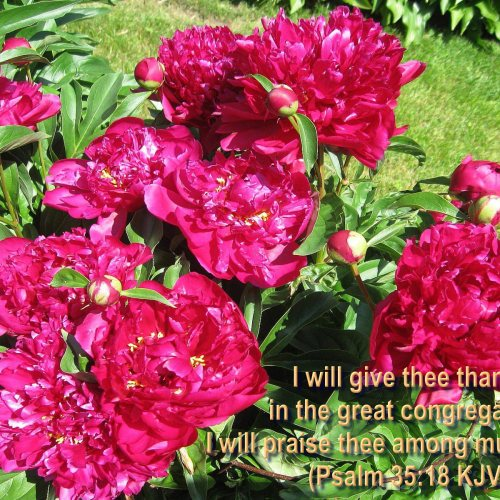 Psalm 35:18 and Flowers christian wallpaper free download. Use on PC, Mac, Android, iPhone or any device you like.
