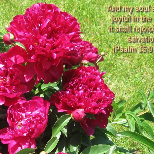 Psalm 35:9 and Flowers christian wallpaper free download. Use on PC, Mac, Android, iPhone or any device you like.