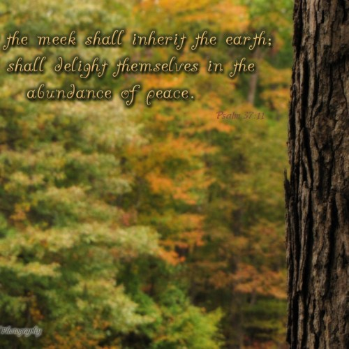 Psalm 37:11 christian wallpaper free download. Use on PC, Mac, Android, iPhone or any device you like.