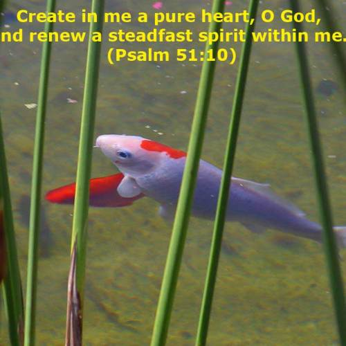 Psalm 51:10 christian wallpaper free download. Use on PC, Mac, Android, iPhone or any device you like.