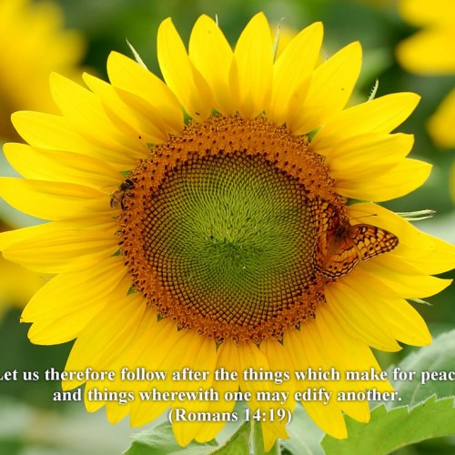 Romans 14:19 christian wallpaper free download. Use on PC, Mac, Android, iPhone or any device you like.