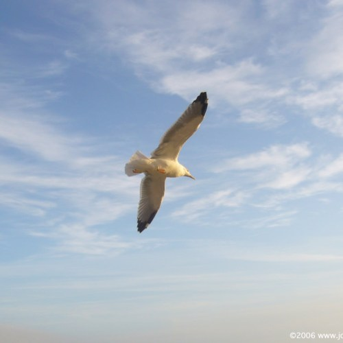 Seagull christian wallpaper free download. Use on PC, Mac, Android, iPhone or any device you like.