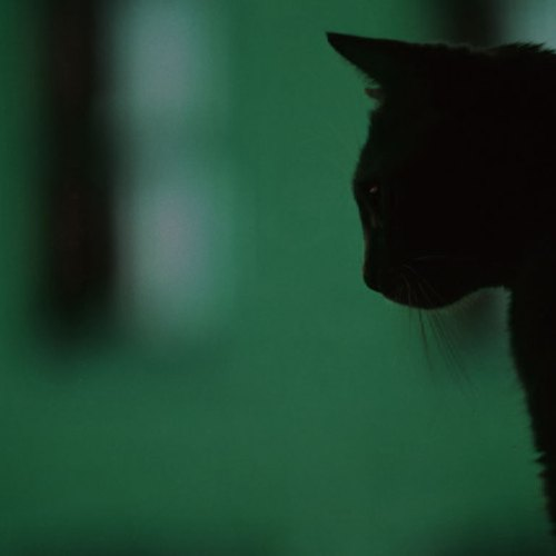 Shadow and Cat christian wallpaper free download. Use on PC, Mac, Android, iPhone or any device you like.