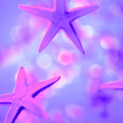Star fish christian wallpaper free download. Use on PC, Mac, Android, iPhone or any device you like.