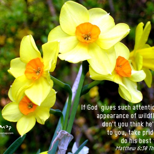 The Appearance of Wildflowers christian wallpaper free download. Use on PC, Mac, Android, iPhone or any device you like.
