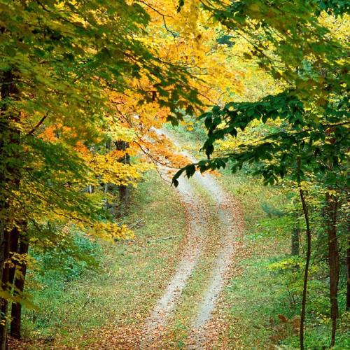 Tree way christian wallpaper free download. Use on PC, Mac, Android, iPhone or any device you like.