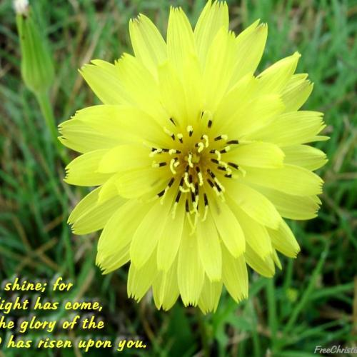 Yellow flower christian wallpaper free download. Use on PC, Mac, Android, iPhone or any device you like.