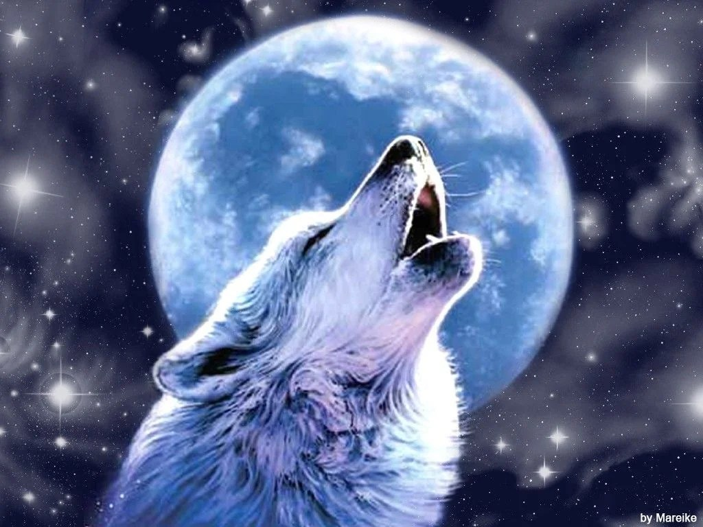 cool wolf wallpapers top