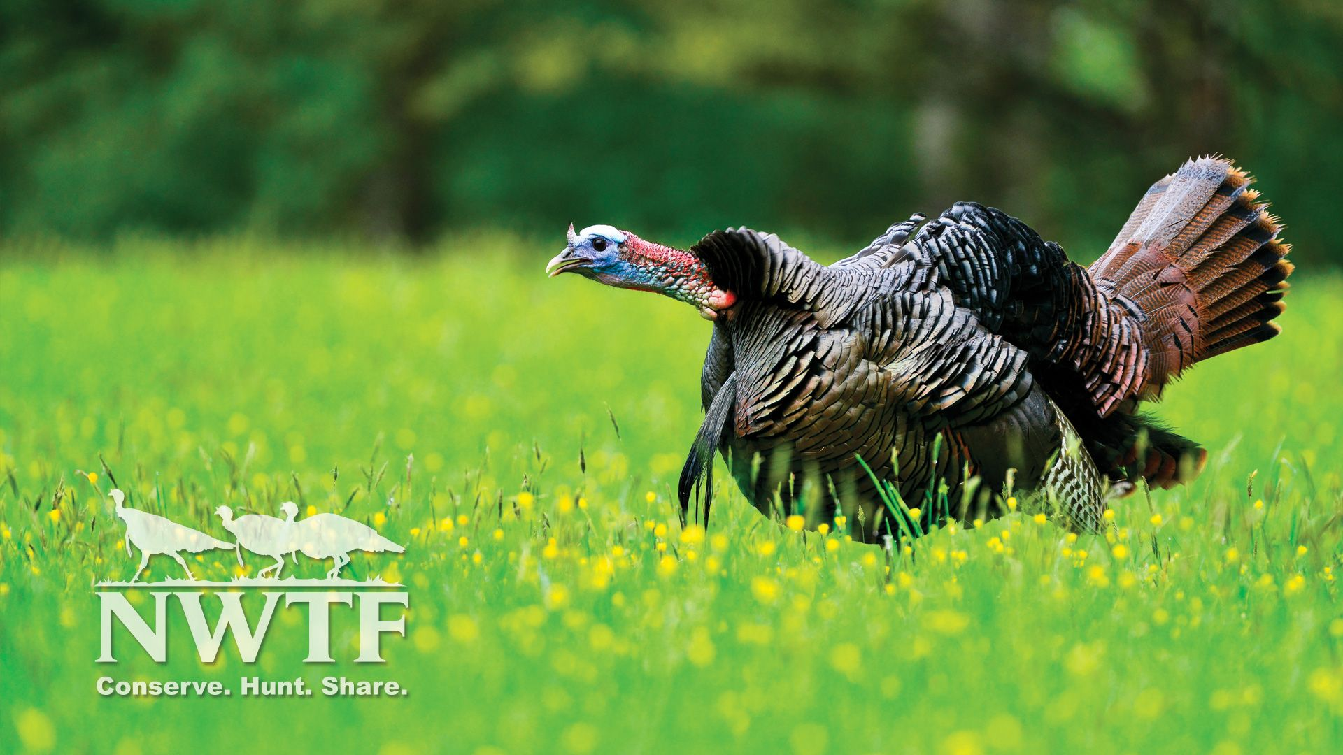 turkey hunting wallpapers top