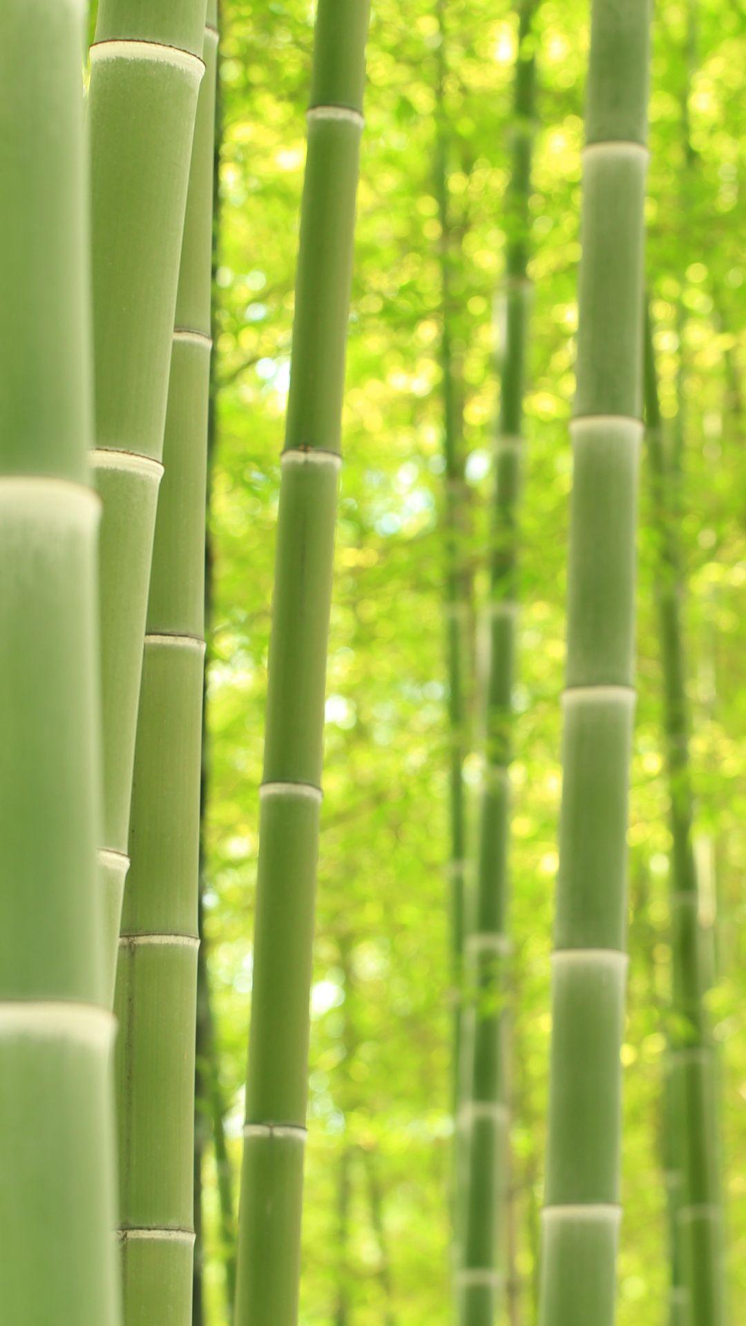 Bamboo Wallpaper Hd : bamboo, wallpaper, Bamboo, Wallpapers, Backgrounds, WallpaperAccess