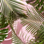 Tropical Aesthetic Wallpapers Top Free Tropical Aesthetic Backgrounds Wallpaperaccess