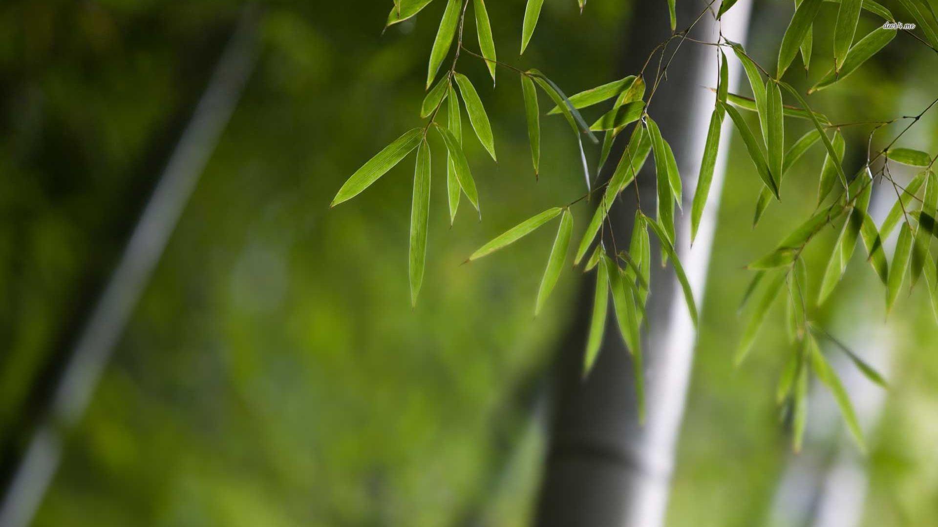 zen bamboo wallpapers top