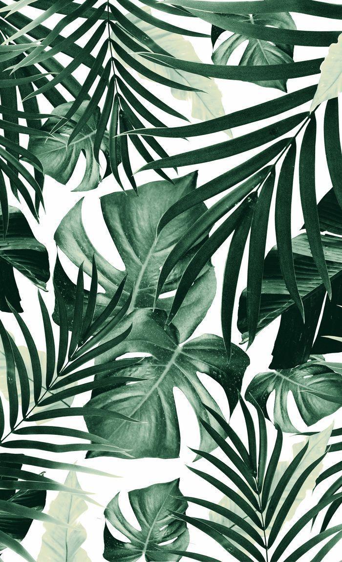 Tropical Leaves Iphone Wallpaper : tropical, leaves, iphone, wallpaper, Leaves, IPhone, Wallpapers, Backgrounds, WallpaperAccess
