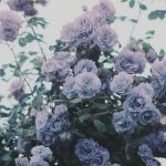 Lavender Aesthetic Wallpapers Top Free Lavender Aesthetic Backgrounds Wallpaperaccess