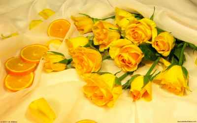 yellow aesthetic background hd rose wallpapers quality backgrounds wallpaperaccess