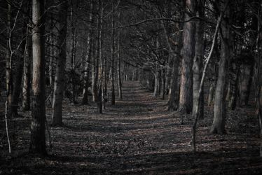 Scary Forest Wallpapers Top Free Scary Forest Backgrounds WallpaperAccess