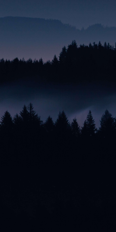 Dark Forest Iphone Wallpaper : forest, iphone, wallpaper, Black, Forest, IPhone, Wallpapers, Backgrounds, WallpaperAccess