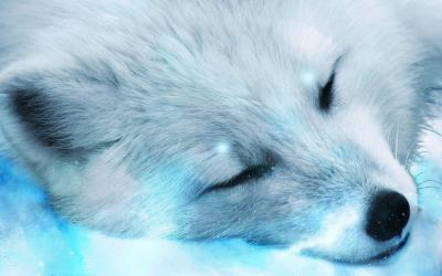 Snow Fox Wallpapers Top Free Snow Fox Backgrounds WallpaperAccess