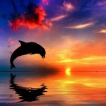 Dolphin Sunset Wallpapers Top Free Dolphin Sunset Backgrounds Wallpaperaccess