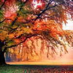 Autumn Trees Hd Wallpapers Top Free Autumn Trees Hd Backgrounds Wallpaperaccess